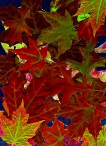 autumn-leaves-nancy-muellerRevised